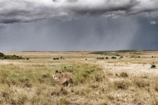 Anton Crone (@antoncrone) of South Africa snapped this ominous photo of big cats and an approaching Kenyan storm: pic.twitter.com/PBcmZj08CP
