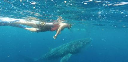 Jonny Dodge (@JonnyDodge) of the UK flies water jetpacks, camps in Antarctica, and now swims with whale sharks? I'm jealous! https://twitter.com/JonnyDodge/status/519204752501276675/photo/1