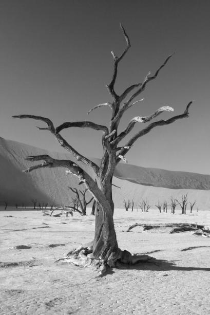 Co-host Savannah Grace (@Sihpromatum) of Holland showed off one of her best shots: THis B&W tree in Namibia: https://twitter.com/Sihpromatum/status/514132822798655488/photo/1