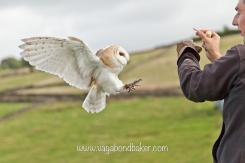 Rachel (@vagabondbaker) of Scotland caught this beautiful owl stopped in motion: https://twitter.com/vagabondbaker/status/521748034779361281/photo/1
