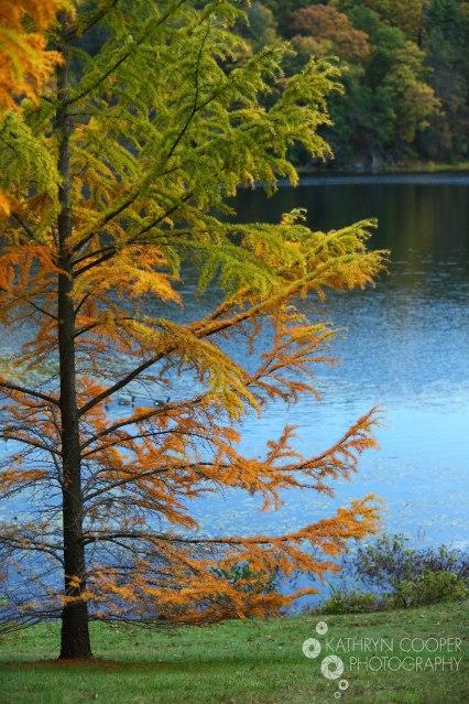 Rainbow tree leaves in New York