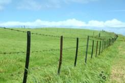 A Hawaiian valley