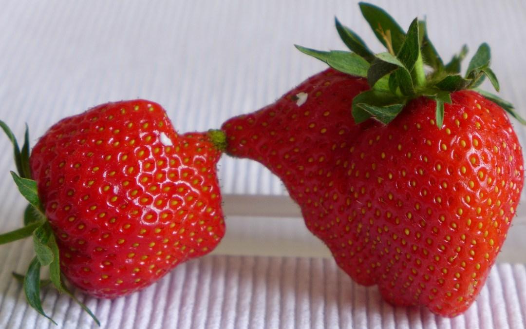 Radiotipp 27 und mehr: Tomaten im Februar und Erdbeeren im März