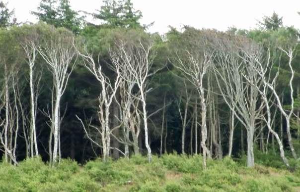 Skog vid stranden i Tisvildeleje