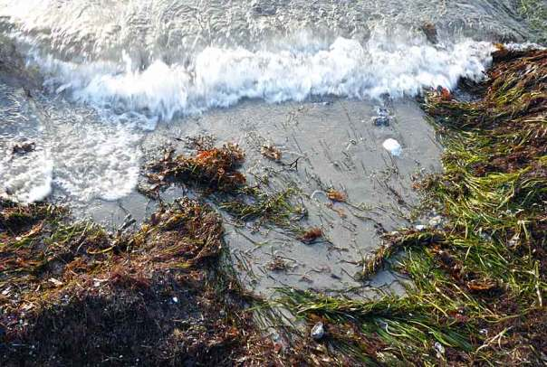 Kämpinge strand