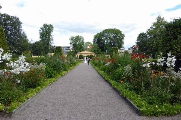 Linnés trädgård