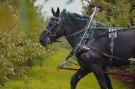 Un cheval est plus qu'un animal