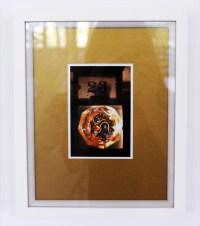 Pavo (xxiii) wild rose - digital print on Ilford Galerie Metallic Gloss 260gram paper, edition of 1