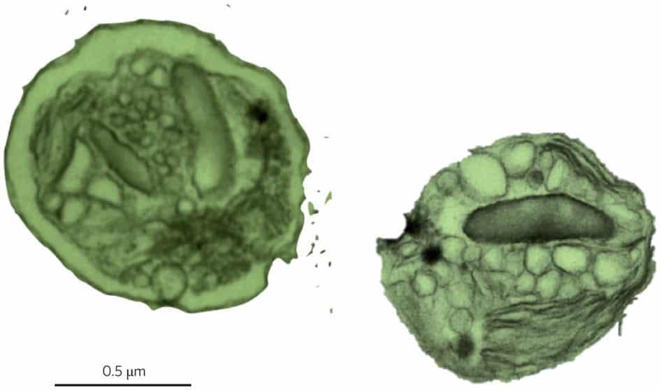 Photo of اكتشاف فيروس يُعيد برمجة العوالق النباتية لتصبح أكثر قدرة علي المنافسة