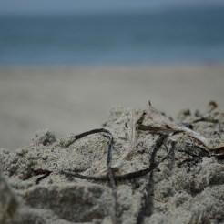 Sandy days