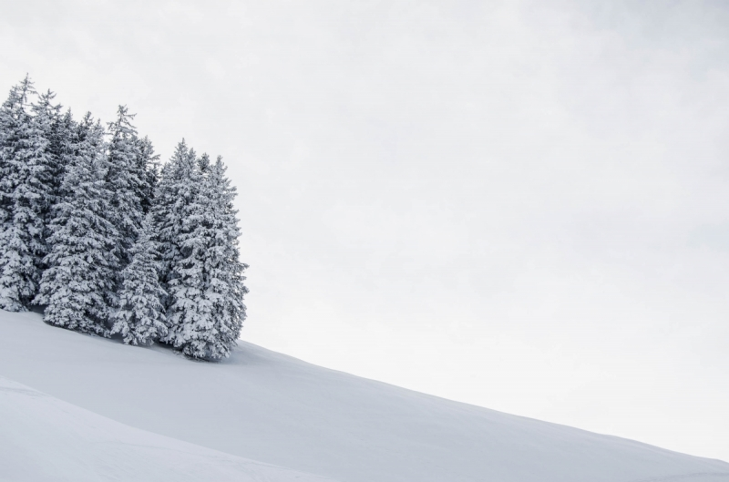 Swiss mountains winter landscape with snow covered trees