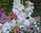Petunias III 55 x 46