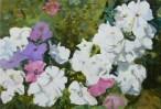 Petunias IV 46 x 32