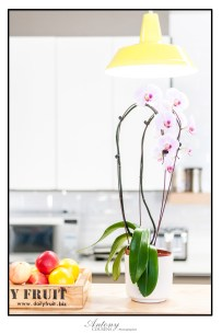 Orchid on Counter