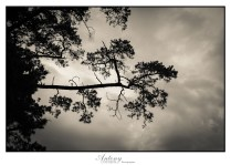 Trees 6