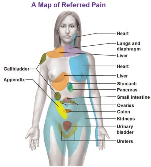 Visceral Sensory Neurons and Referred Pain