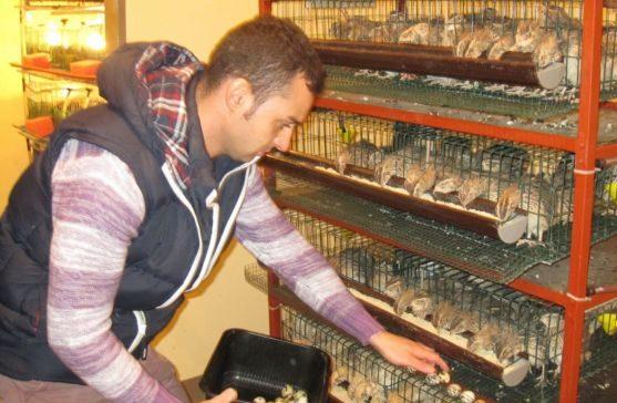 Afacerea cu prepelițe japoneze aduce profituri, dar și satisfacție