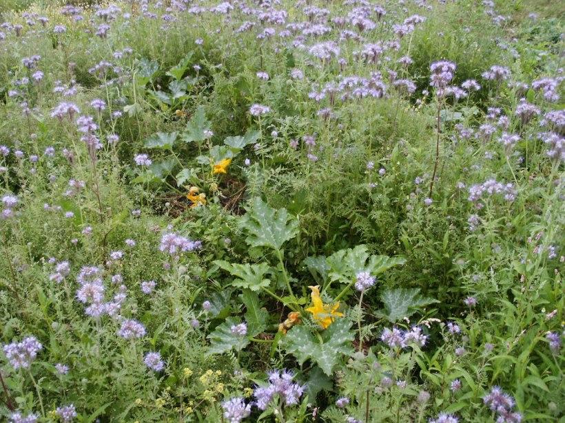 Biodiversita' nell'orto