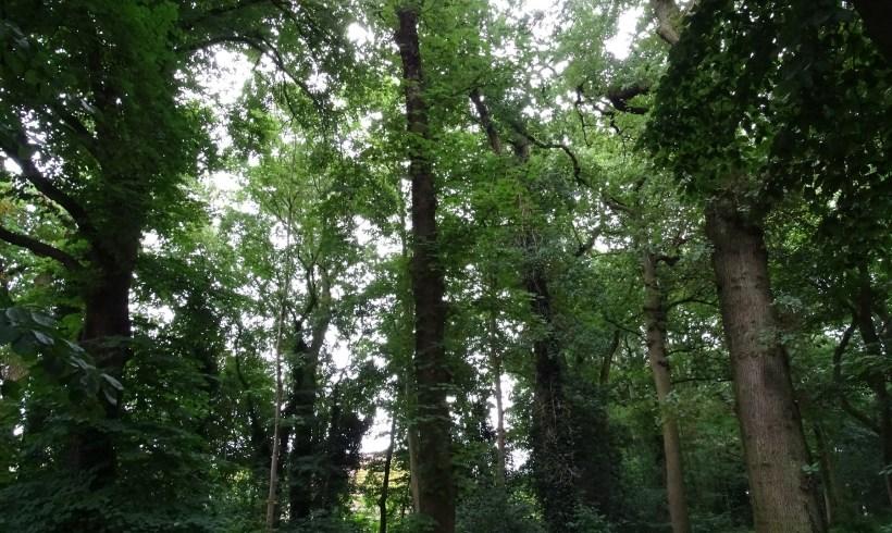 Het Bos van Wigeri