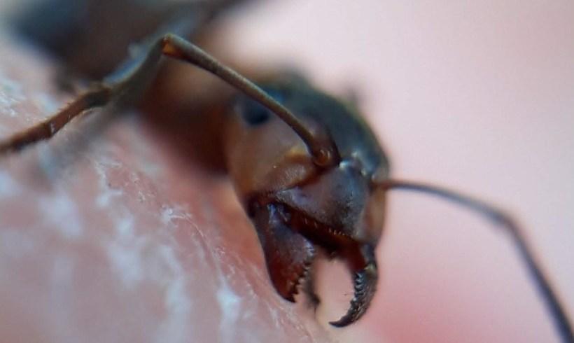 Mieren vs teken
