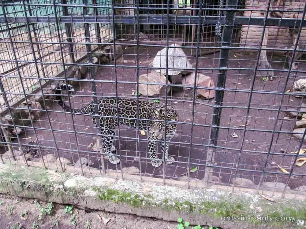 Буджумбурский зоопарк