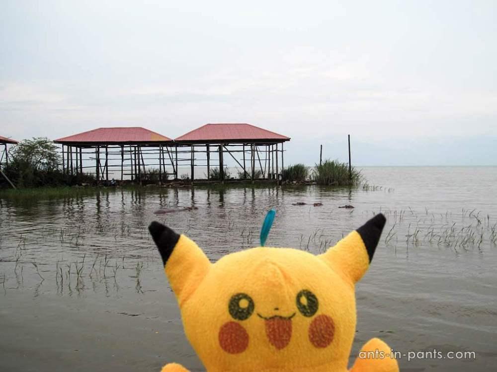 Pika and Tanganyika lake
