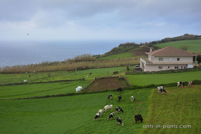 Food in the Azores