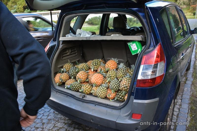 azorean pineapple