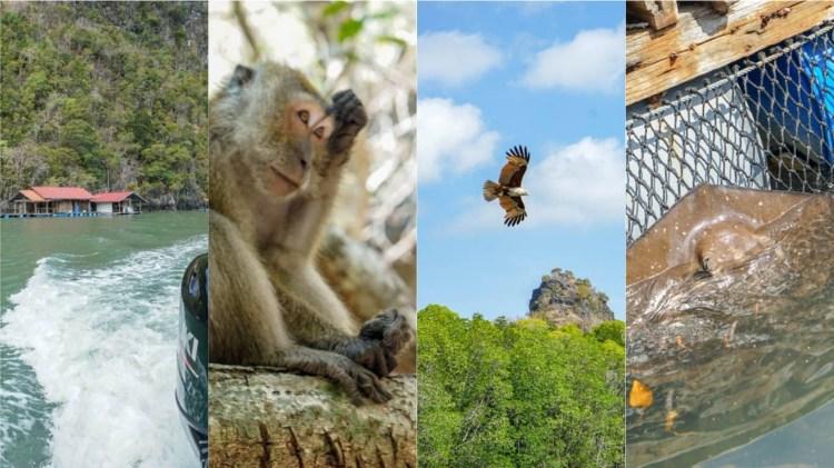蘭卡威丹絨魯紅樹林地質公園快艇Kilim Karst Geoforest Park   蝙蝠洞、賞老鷹、可愛魟魚。
