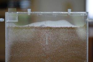 右端を見ると土が少し盛り上がっている 8時10分撮影
