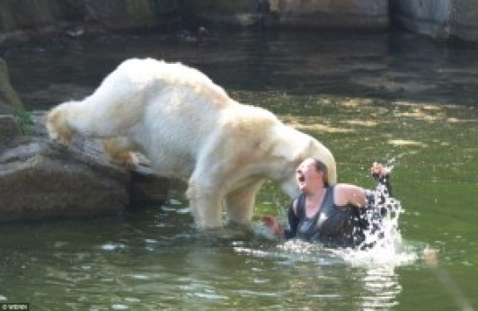 polar_bear_vs_human