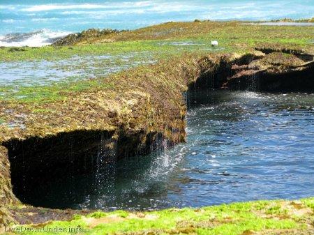 Woda spływa ze skał, po glonach