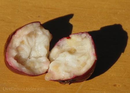 Guawa z naszego ogrodu, guawa truskawkowa