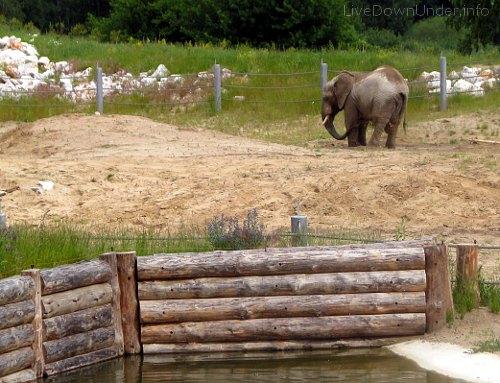 slon_zoo