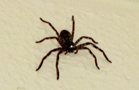 Niebezpieczne zwierzęta Australii: węże i pająki