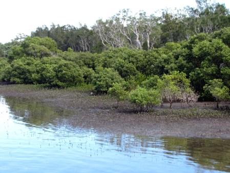 Las namorzynowy, Port Stephens, Australia