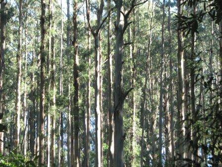 Sherbrooke Forest, Góry Dandenong, Wiktoria, Australia