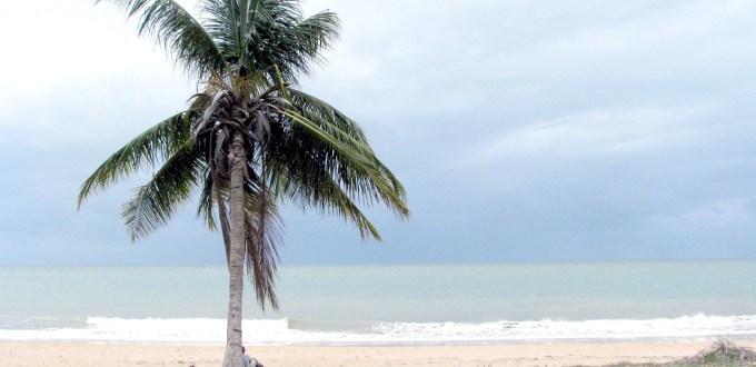 palma, Wyspa Magnetyczna, Queensland, Australia, tapety na pulpit