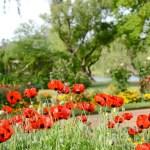 Wiosna w Castlemaine