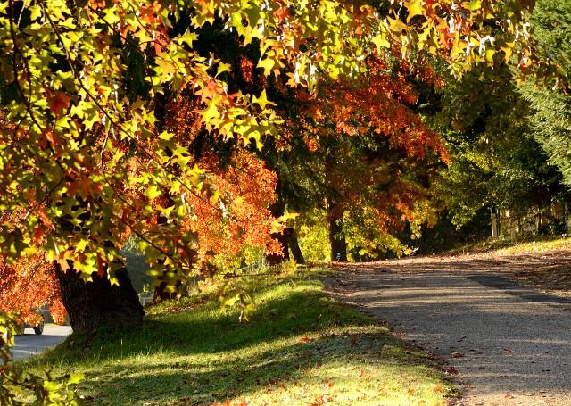 Złota jesień w Australii, Bright, Wiktoria