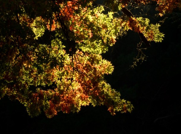 bright_autumn12