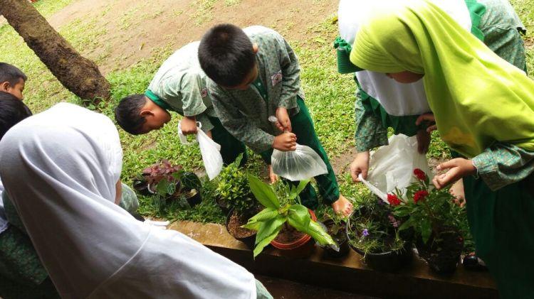 merawat-tanaman-hias-dalam-pot_ipa-kls-2