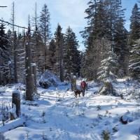 Der Harz – mein Lieblingsurwald