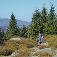 Meine 11 persönlichen Wanderhighlights im Harz