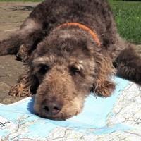 Roadtrip Polen mit Hund – Karten, Reiseführer, Checklisten oder doch einfach treiben lassen?