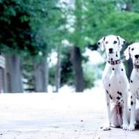 【四ツ谷駅】ペットと一緒におでかけ♡四ツ谷駅近くでペット同伴できる飲食店のまとめ