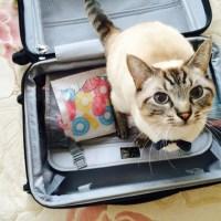 ペットと一緒にお泊まりできる♡ペット同伴宿泊可なホテル・宿のまとめ