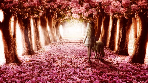 flower_path-HD