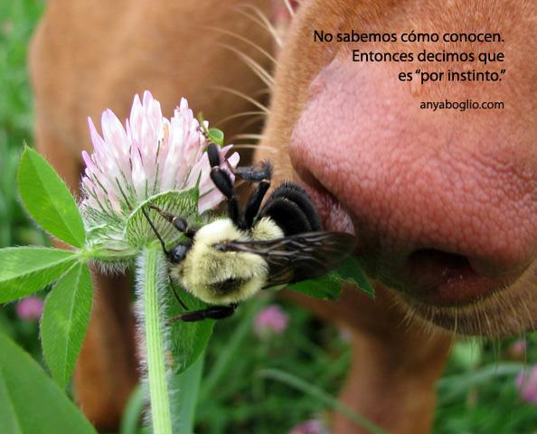 conocimiento-instinto-abeja