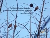 derechos-libertades-injusticia-torcazas